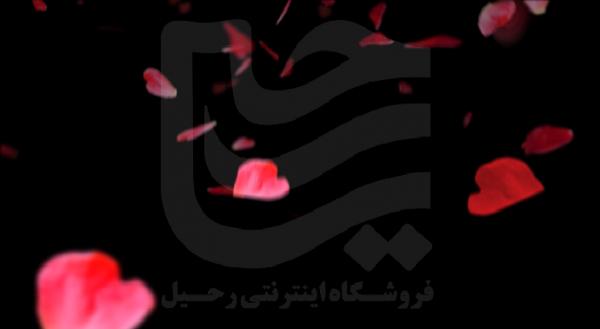 فوتیج گل رز